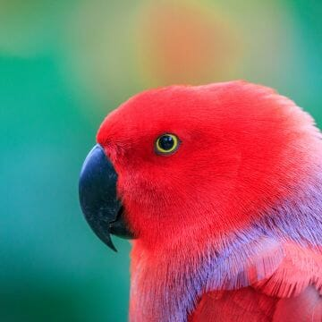 Macaw Parrot  - Android, iPhone, Desktop HD Backgrounds / Wallpapers (1080p, 4k) HD Wallpapers (Desktop Background / Android / iPhone) (1080p, 4k)