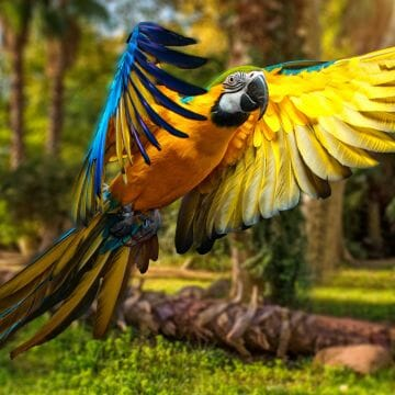 Colorful Parrot  - Android, iPhone, Desktop HD Backgrounds / Wallpapers (1080p, 4k) HD Wallpapers (Desktop Background / Android / iPhone) (1080p, 4k)