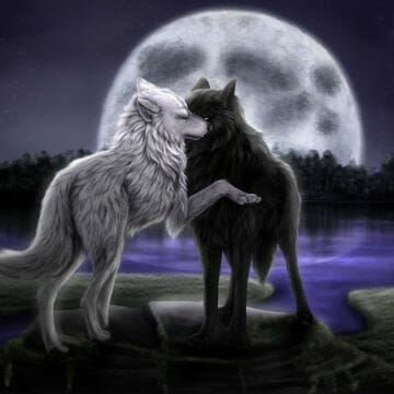 Wolf Wallpaper 19 - 1400 X 1000 - Android / iPhone HD Wallpaper Background Download HD Wallpapers (Desktop Background / Android / iPhone) (1080p, 4k)